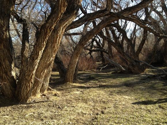 Woods 422