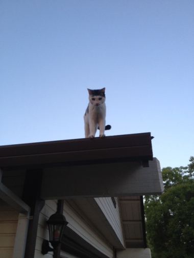 Lucky kitty, not so Lucky. Yes, you are on the roof.