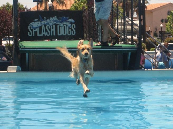 Splash_Dog_Summer 015
